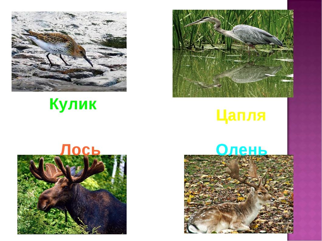 Цапля Лось Олень Кулик