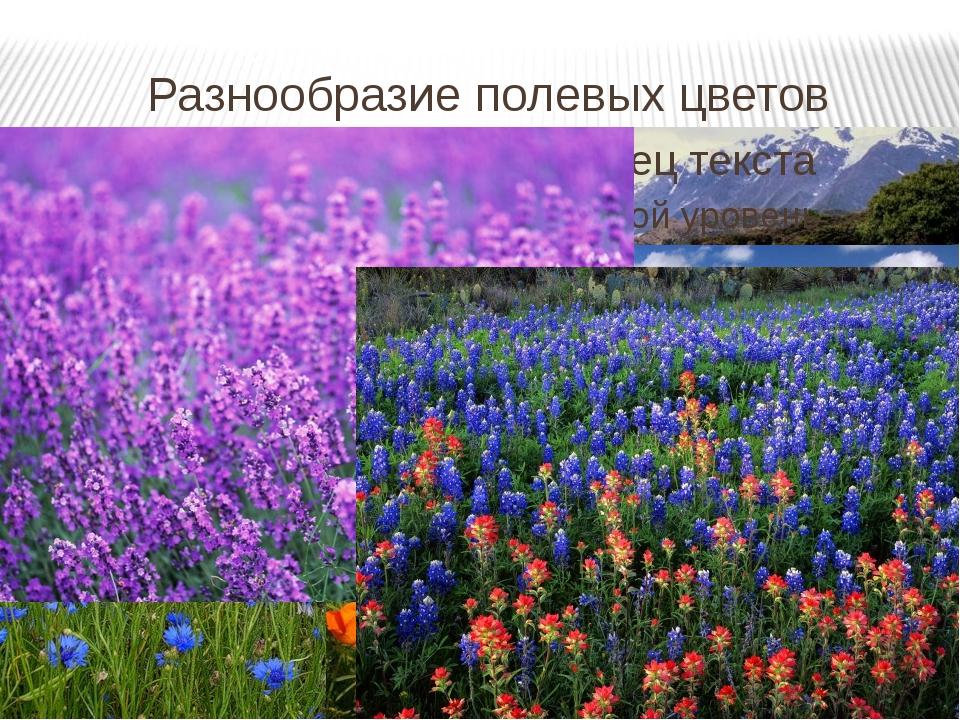 Разнообразие полевых цветов