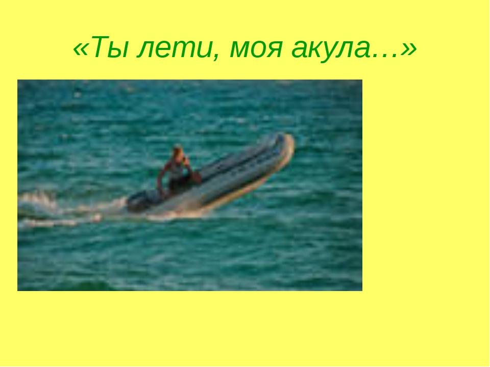 «Ты лети, моя акула…»