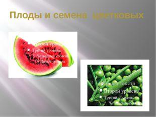 Плоды и семена цветковых