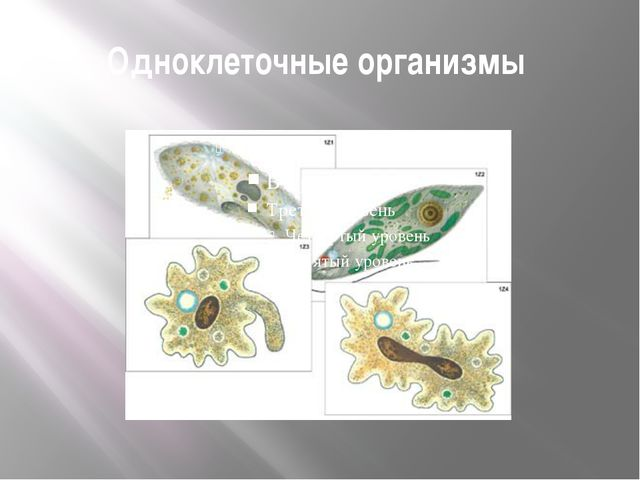 Одноклеточные организмы