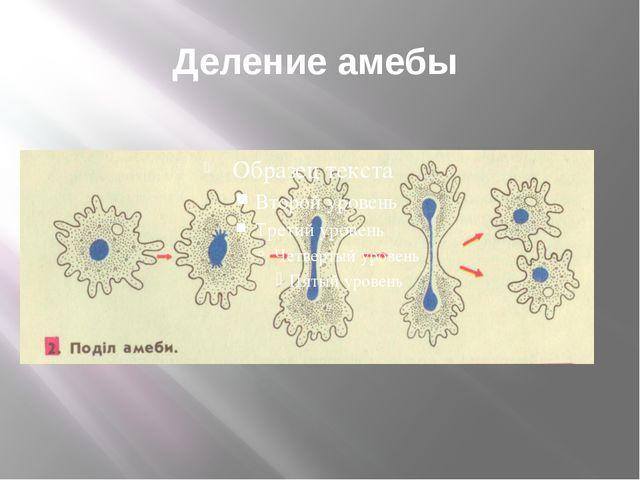 Деление амебы