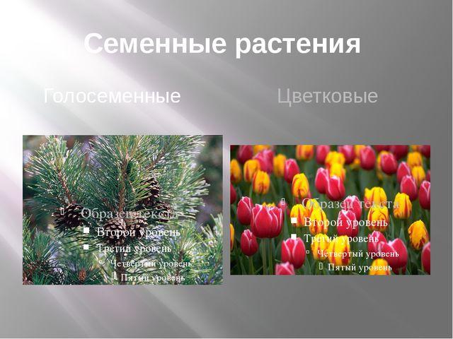 Семенные растения Голосеменные Цветковые