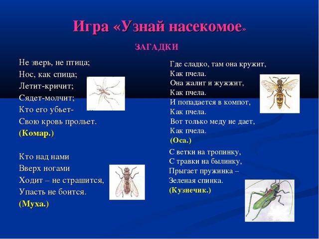 Игра «Узнай насекомое» Не зверь, не птица; Нос, как спица; Летит-кричит; Сяде...