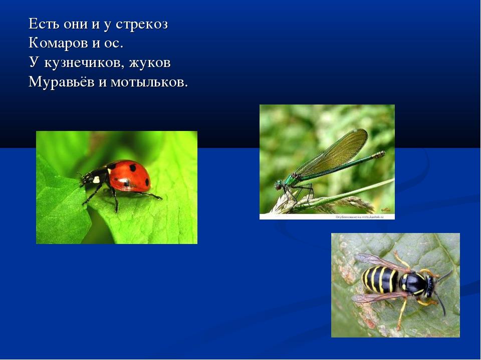 Есть они и у стрекоз Комаров и ос. У кузнечиков, жуков Муравьёв и мотыльков.