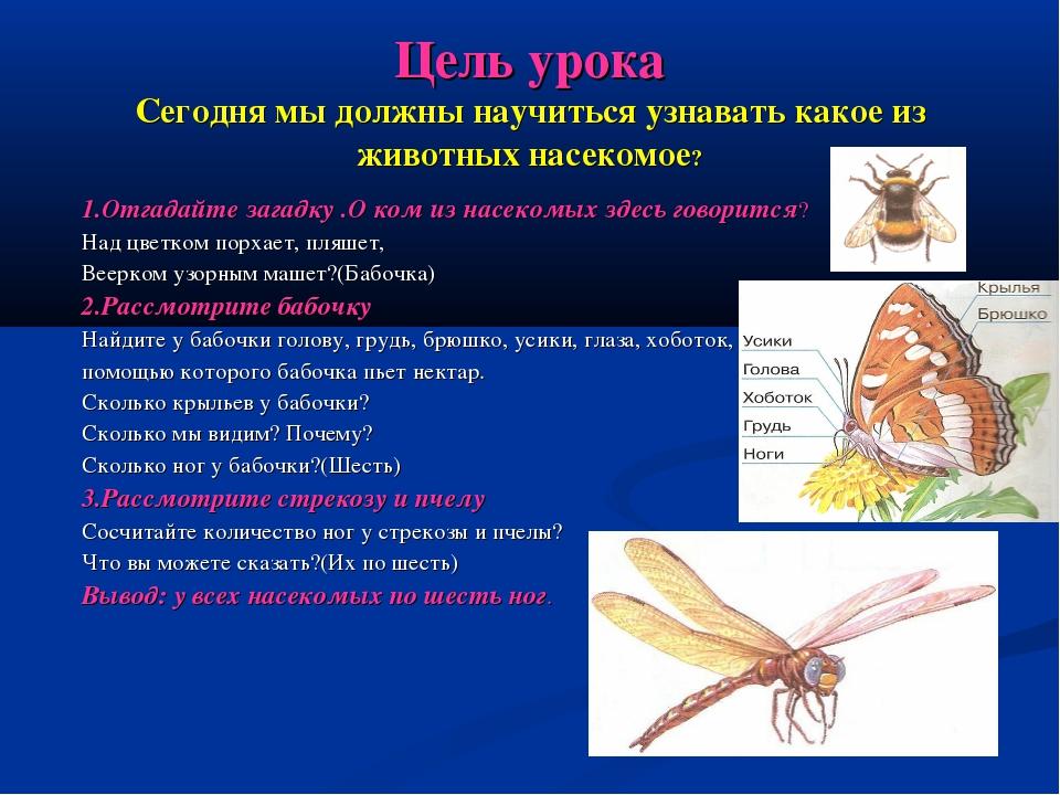 Цель урока Сегодня мы должны научиться узнавать какое из животных насекомое?...