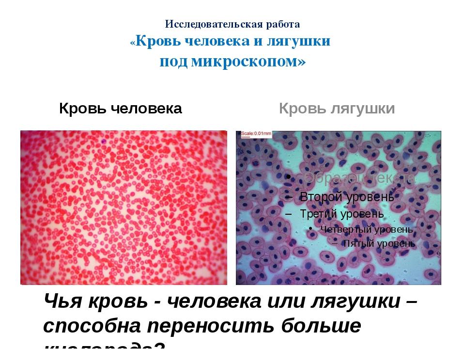 кровь лягушки под микроскопом фото