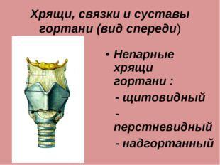 Хрящи, связки и суставы гортани (вид спереди) Непарные хрящи гортани : - щито