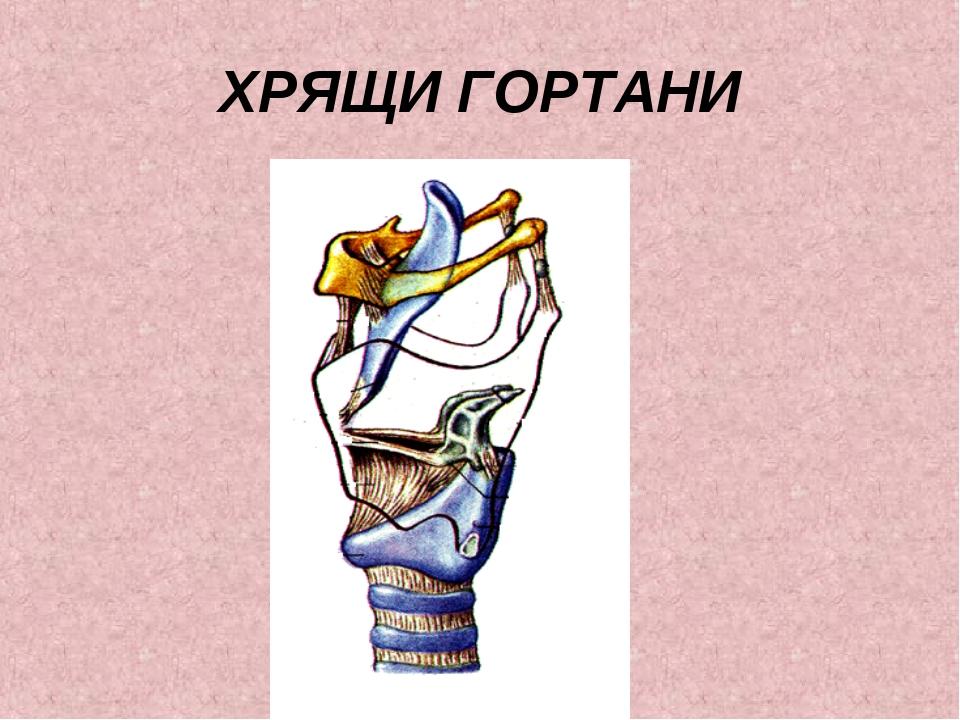 ХРЯЩИ ГОРТАНИ