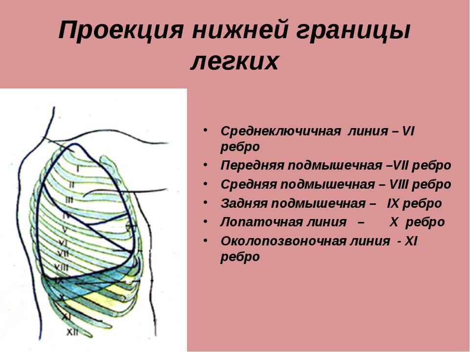 Проекция нижней границы легких Среднеключичная линия – VI ребро Передняя подм...