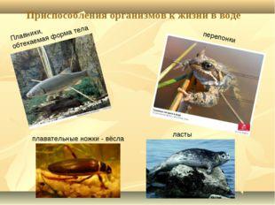 Приспособления организмов к жизни в воде Плавники, обтекаемая форма тела ласт