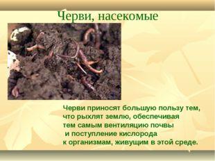 Черви, насекомые Черви приносят большую пользу тем, что рыхлят землю, обеспеч