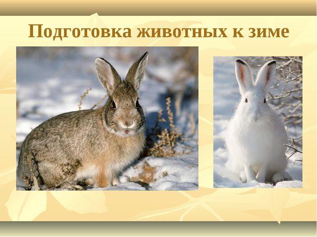 Подготовка животных к зиме