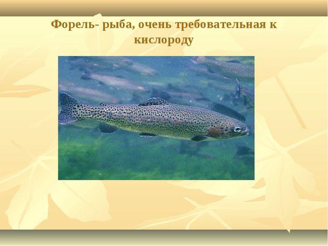 Форель- рыба, очень требовательная к кислороду