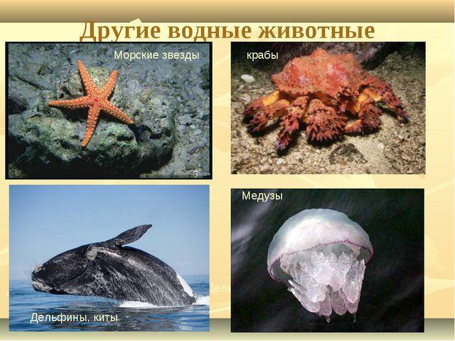 Другие водные животные Морские звезды Дельфины, киты Дельфины, киты Медузы кр...