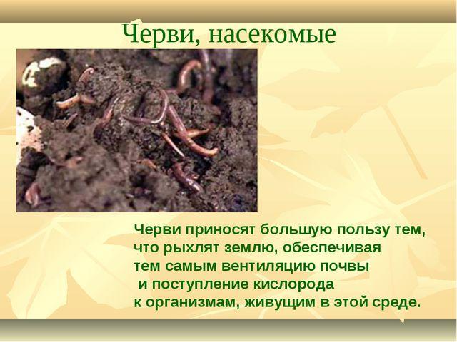 Черви, насекомые Черви приносят большую пользу тем, что рыхлят землю, обеспеч...