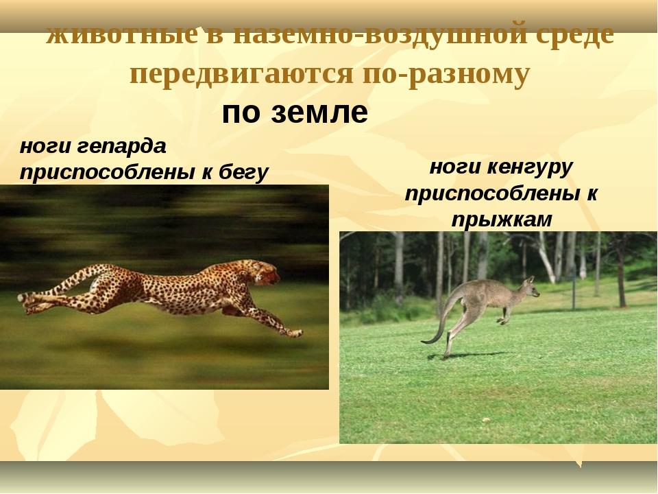 животные в наземно-воздушной среде передвигаются по-разному по земле ноги геп...