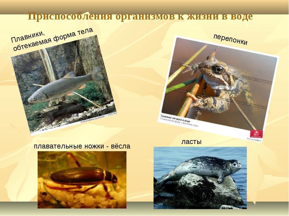 Приспособления организмов к жизни в воде Плавники, обтекаемая форма тела ласт...