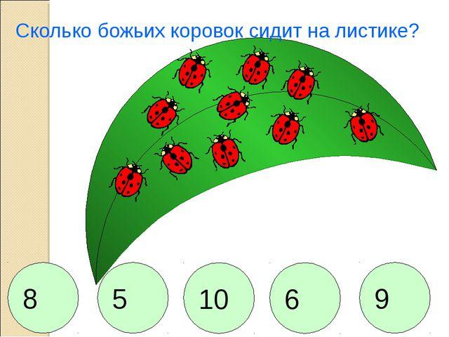 Сколько божьих коровок сидит на листике? 8 5 10 6 9
