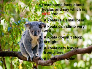 Read some facts about koalas and say which is NOT true. A koala is a small be