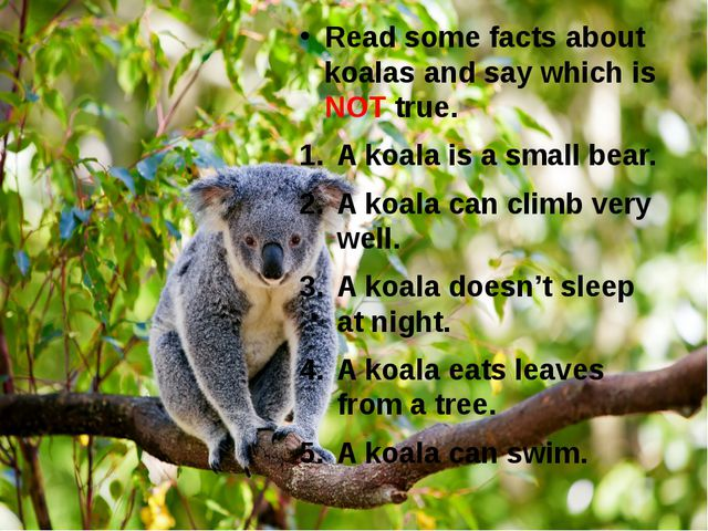 Read some facts about koalas and say which is NOT true. A koala is a small be...
