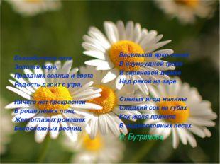 Беззаботного лета Золотая пора, Праздник солнца и света Радость дарит с утра.