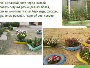 6.Оформлен школьный двор перед школой – использовались петунья разноцветная,