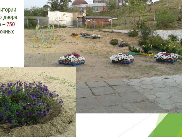 7. На территории школьного двора высажено – 750 штук цветочных культур