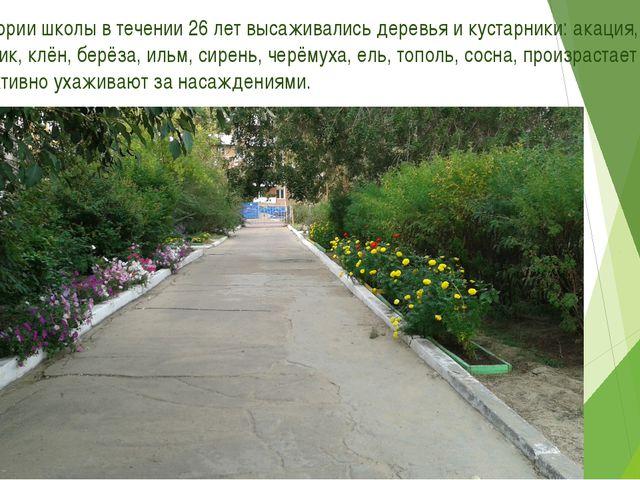 8. На территории школы в течении 26 лет высаживались деревья и кустарники: ак...