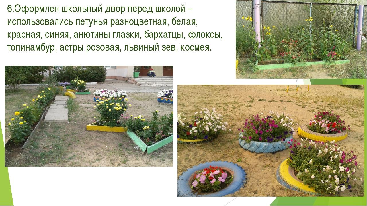 6.Оформлен школьный двор перед школой – использовались петунья разноцветная,...