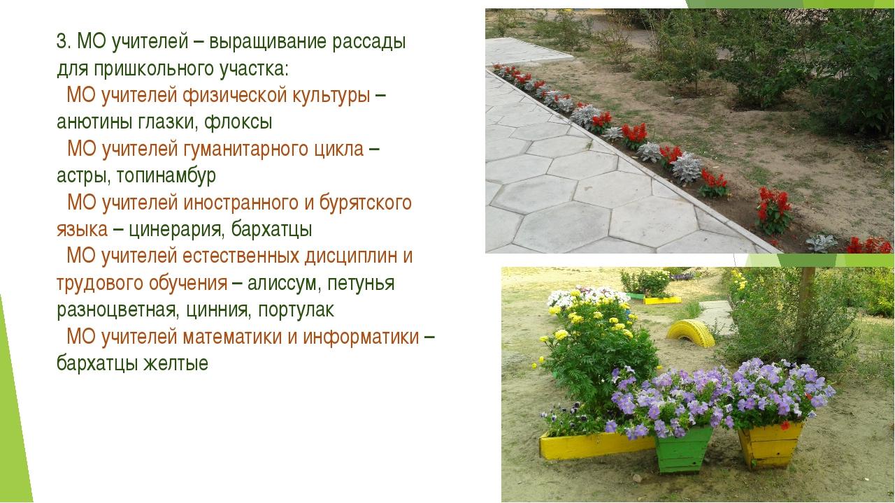 3. МО учителей – выращивание рассады для пришкольного участка: МО учителей фи...