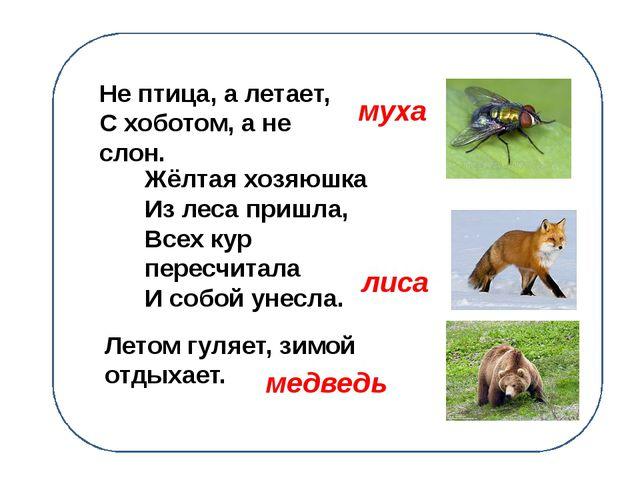 Не птица, а летает, С хоботом, а не слон. Жёлтая хозяюшка Из леса пришла, Вс...