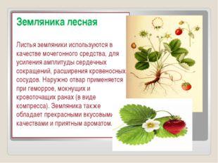 Земляника лесная Листья земляники используются в качестве мочегонного средст