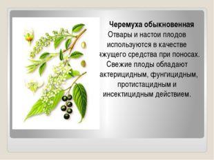 Черемуха обыкновенная Отвары и настои плодов используются в качестве вяжущег