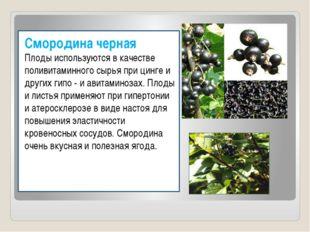Смородина черная Плоды используются в качестве поливитаминного сырья при цинг
