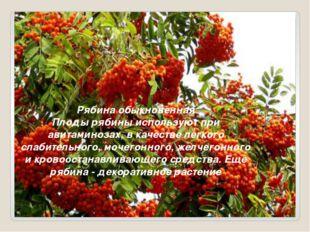 Рябина обыкновенная Плоды рябины используют при авитаминозах, в качестве лег