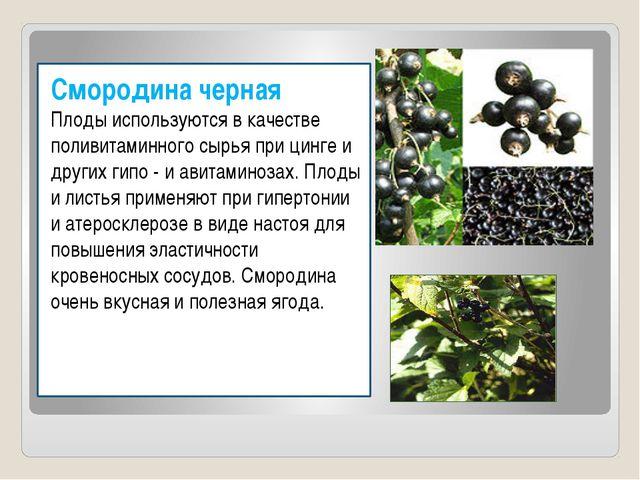 Смородина черная Плоды используются в качестве поливитаминного сырья при цинг...