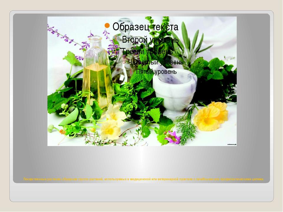 Лекарственные растения, обширная группа растений, используемых в медицинской...