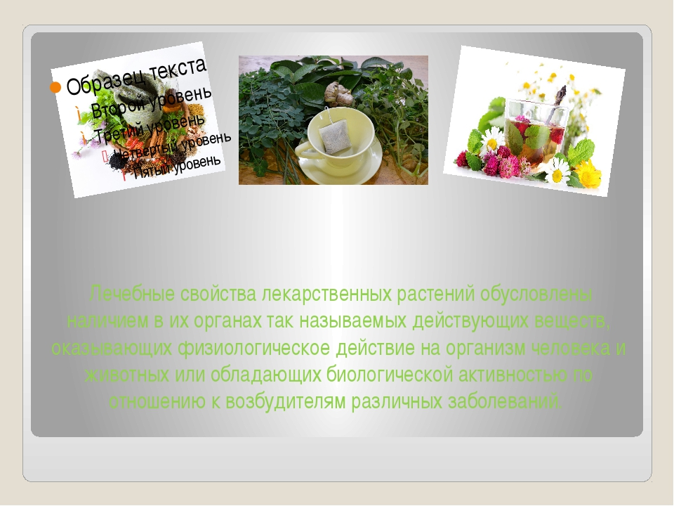 Лечебные свойства лекарственных растений обусловлены наличием в их органах т...