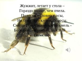 Жужжит, летает у стола – Гораздо толще, чем пчела. Полоски - словно у осы, На