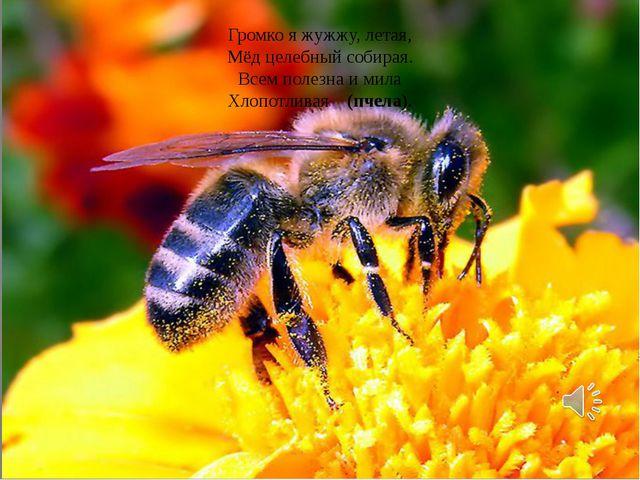 Громко я жужжу, летая, Мёд целебный собирая. Всем полезна и мила Хлопотливая...
