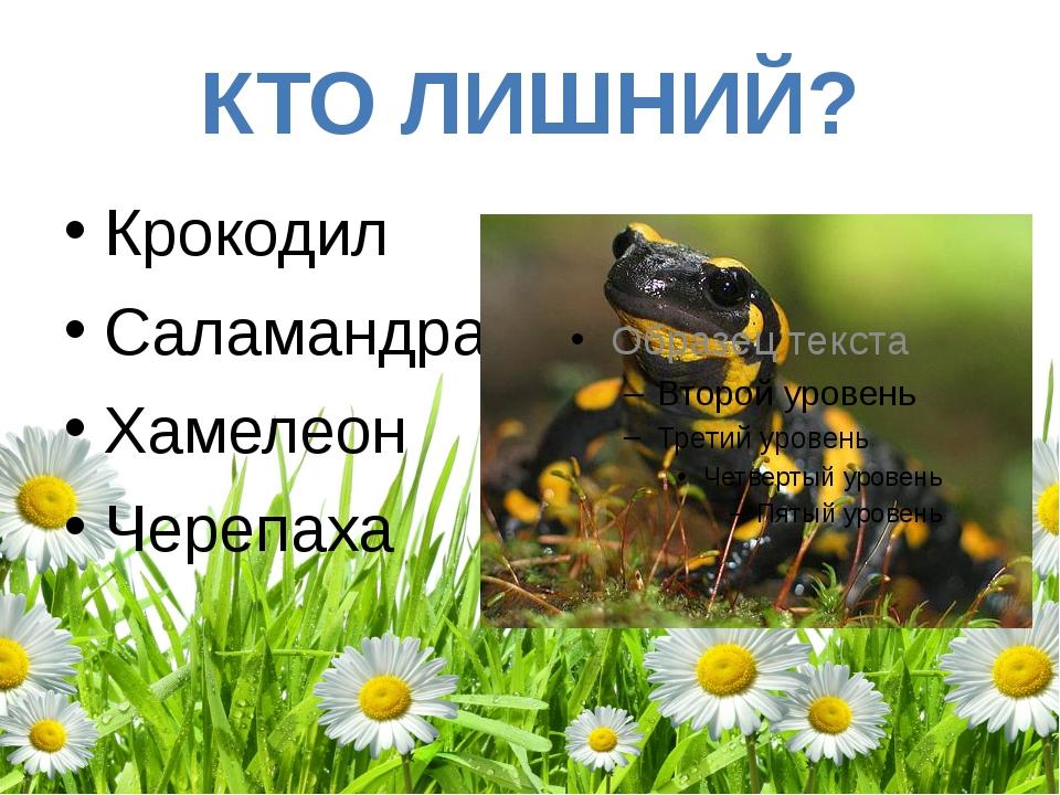 КТО ЛИШНИЙ? Крокодил Саламандра Хамелеон Черепаха