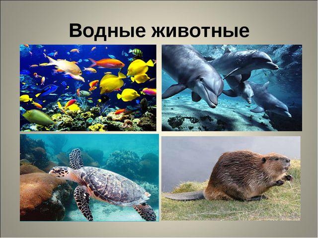 Водные животные