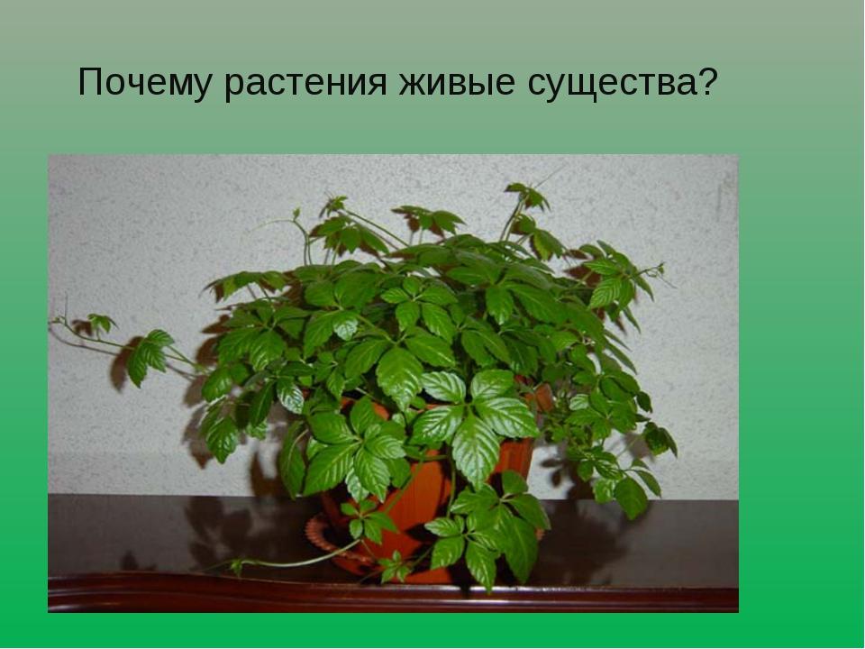 Почему растения живые существа?