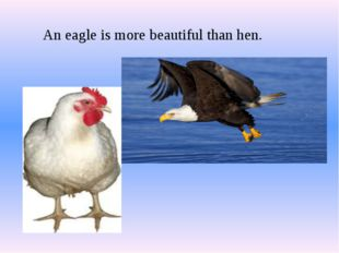 An eagle is more beautiful than hen.