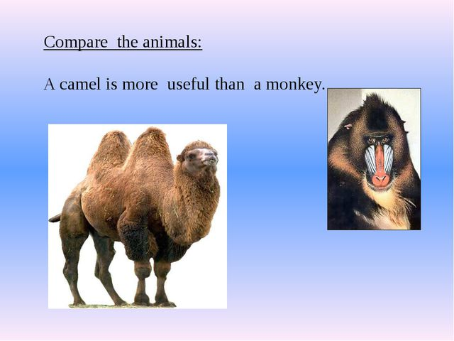 Compare the animals: A camel is more useful than a monkey.