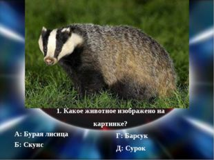 1. Какое животное изображено на картинке? А: Бурая лисица Б: Скунс Г: Барсук
