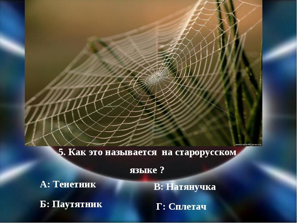 5. Как это называется на старорусском языке ? А: Тенетник Б: Паутятник В: Нат...