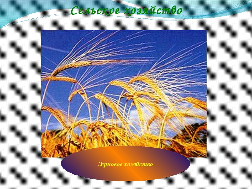 Сельское хозяйство Зерновое хозяйство