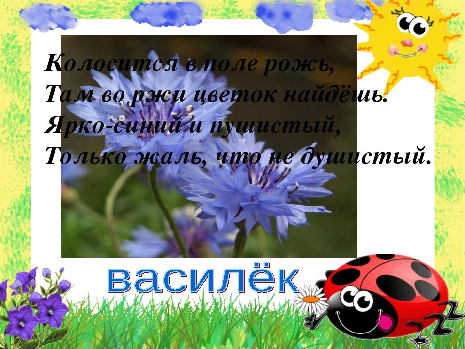Колосится в поле рожь, Там во ржи цветок найдёшь. Ярко-синий и пушистый, Толь...